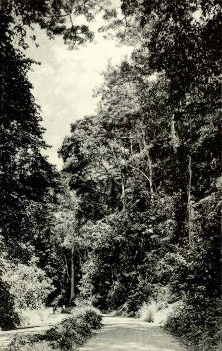 Dans les années 1950, Yangambi est devenu le fleuron de la politique agricole coloniale belge. Collection de cartes postales vierges avec des images de la station de recherche de Yangambi, commandée par Nilco, années 1950. ARA, Archives INEAC, n ° 2828.